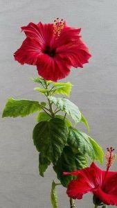 5.18 Flower